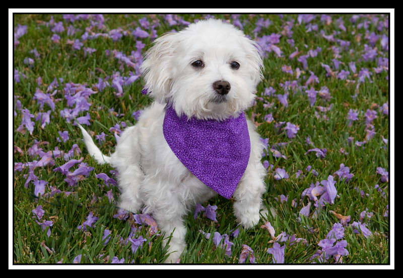 Holly on jacaranda...