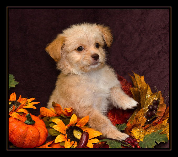 IMAGE: http://rpcrowe.smugmug.com/Other/MALTESE-RESCUE-DOGS/i-KnNXRZQ/0/L/Bernadettes%20Puppy%20Caramel-L.jpg