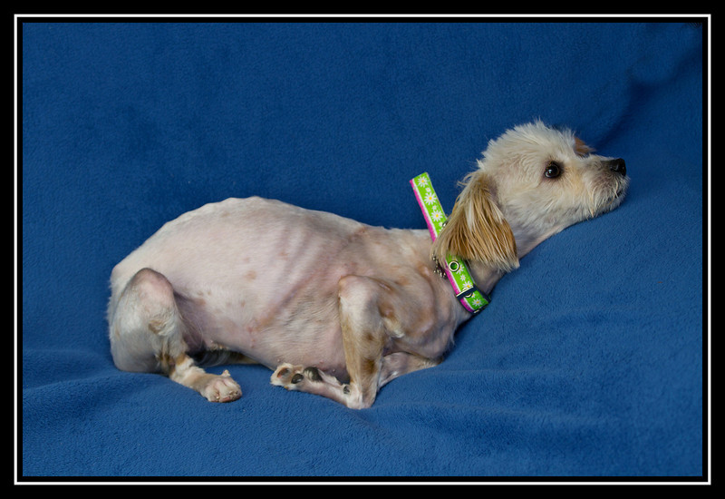 IMAGE: http://rpcrowe.smugmug.com/Other/MALTESE-RESCUE-DOGS/i-Nv38vqW/0/L/Felicia%20and%20Lady_1779_edited-2-L.jpg