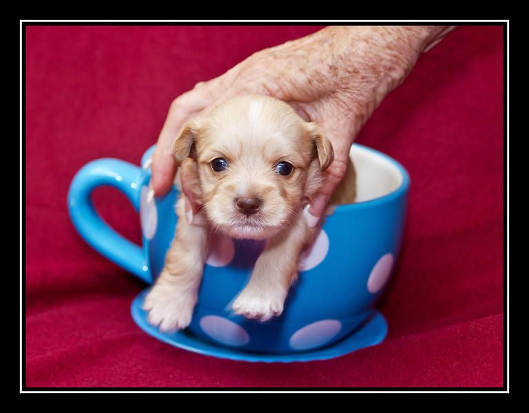 Cup of Puppy
