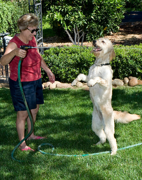 IMAGE: http://rpcrowe.smugmug.com/Pets/Holly-Doodle/Holly-057-Judy-with-hose/347678877_5bKAR-L.jpg