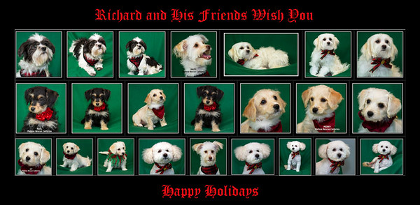 This is a Christmas greeting done from the home page of my smugmug account...