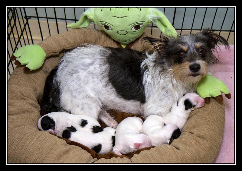 IMAGE: https://rpcrowe.smugmug.com/Pets/MALTESE-RESCUE-CALIFORNIA/i-qDxkmpN/0/L/Sasha%20and%20puppies_5343-L.jpg